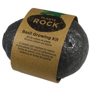 Plants Rock Basilic - Petite Plante