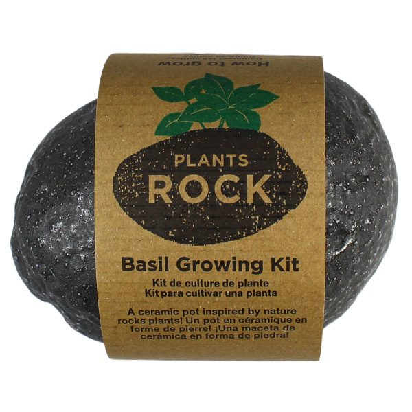 Plants Rock Basilic - Petite Plante - 2