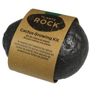 Plants Rock Cactus - Petite Plante