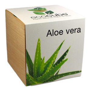Ecocube Aloe Vera - Petite Plante