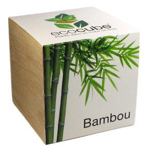 Ecocube Bambou - Petite Plante