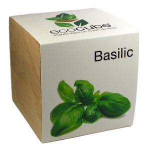 Ecocube Basilic - Petite Plante