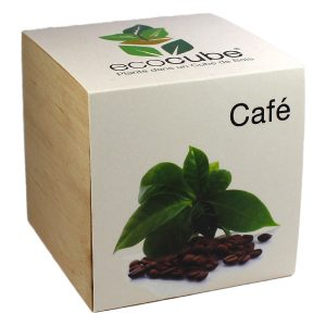 Ecocube Café - Petite Plante