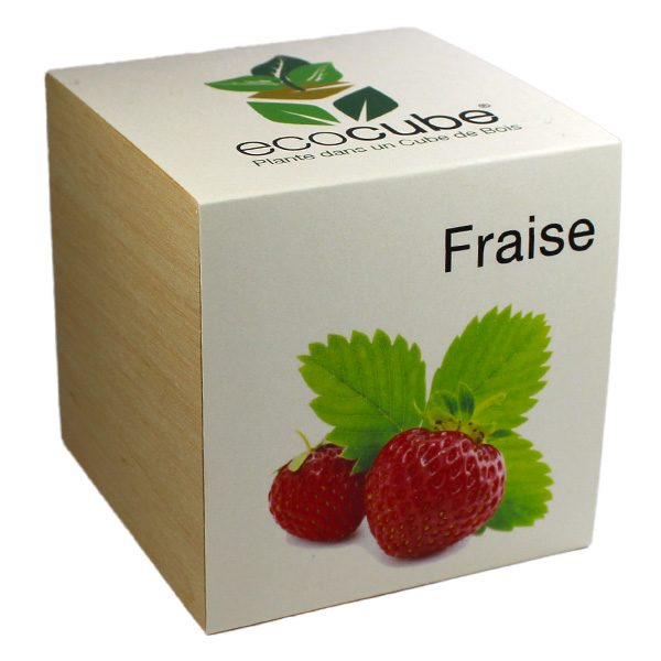Ecocube Fraise - Petite Plante