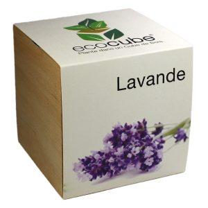 Ecocube Lavande - Petite Plante