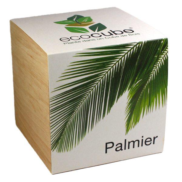 Ecocube Palmier - Petite Plante