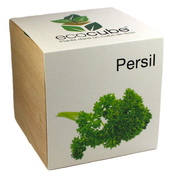 Ecocube Persil - Petite Plante