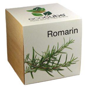 Ecocube Romarin - Petite Plante