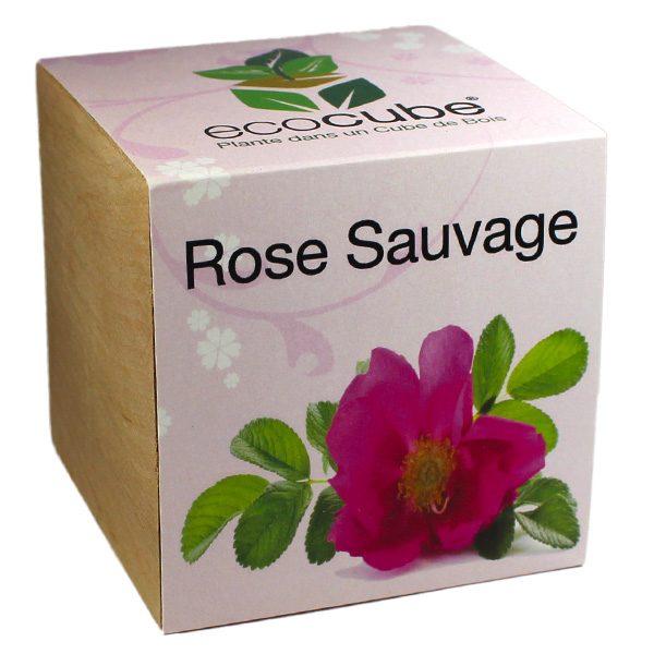 Ecocube Rose Sauvage - Petite Plante