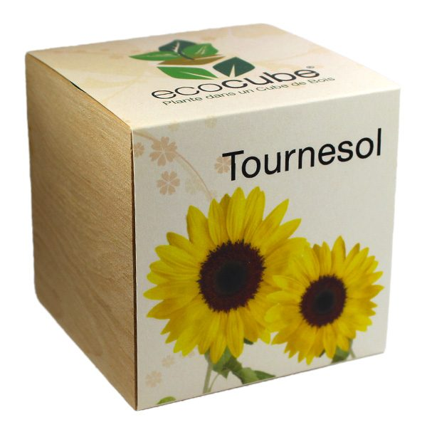 Ecocube Tournesol - Petite Plante