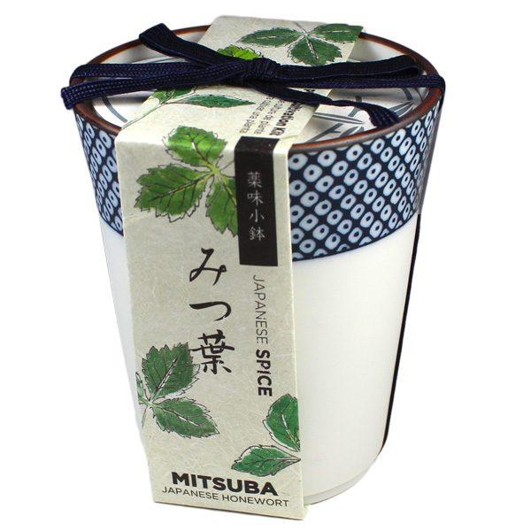 Épices Japonaises Mitsuba - Petite Plante