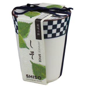 Épices Japonaises Shiso - Petite Plante