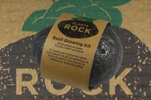 Blog Promo Plants Rock - Petite Plante