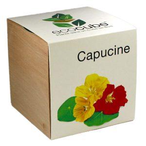Ecocube Capucine - Petite Plante