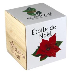 Ecocube Etoile de Noël - Petite Plante