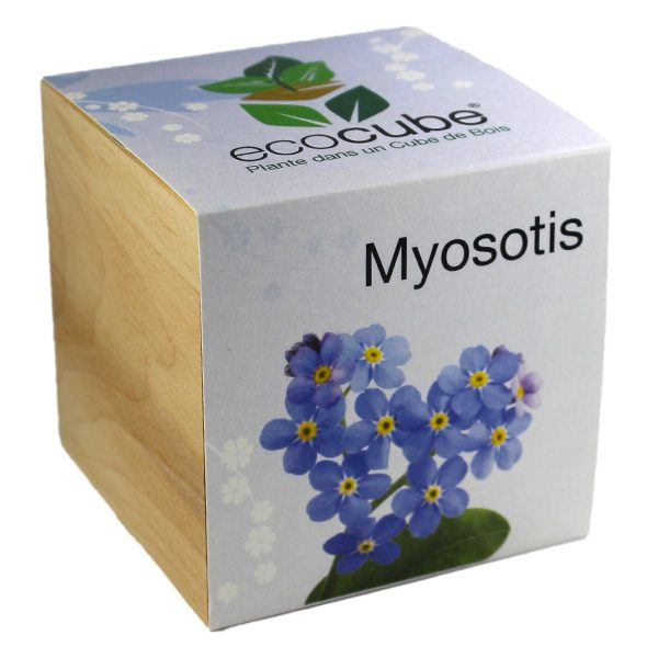 Ecocube Myosotis - Petite Plante
