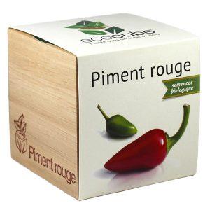 Ecocube Piment Rouge - Petite Plante