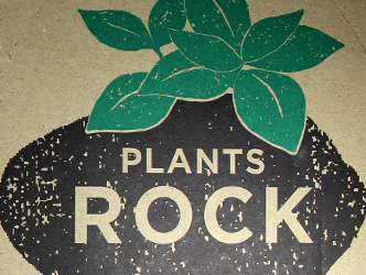 Promo Plants Rock - Petite Plante