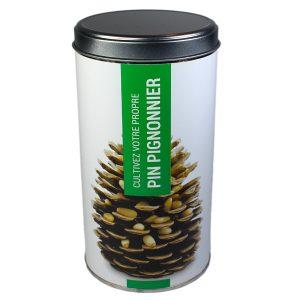 Cultivez votre propre Pin Pignonnier - Petite Plante