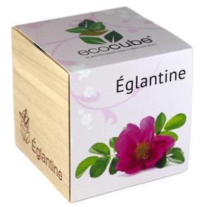 Ecocube Églantine - Petite Plante