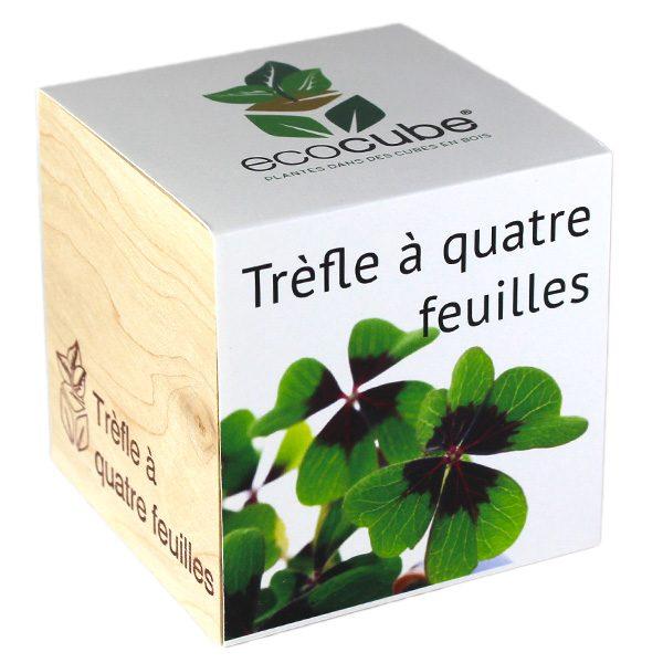 Ecocube Trèfle à Quatre Feuilles - Petite Plante