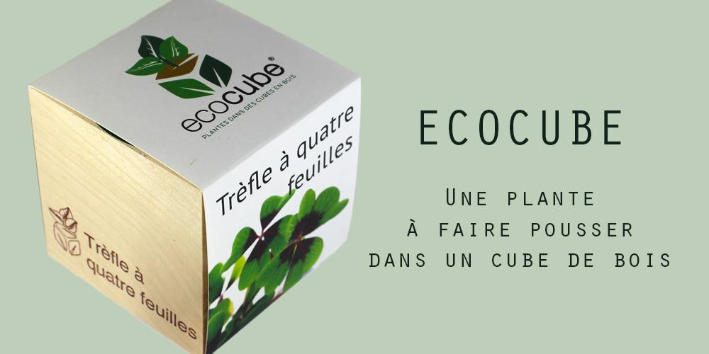 Ecocube - banner - Petite Plante